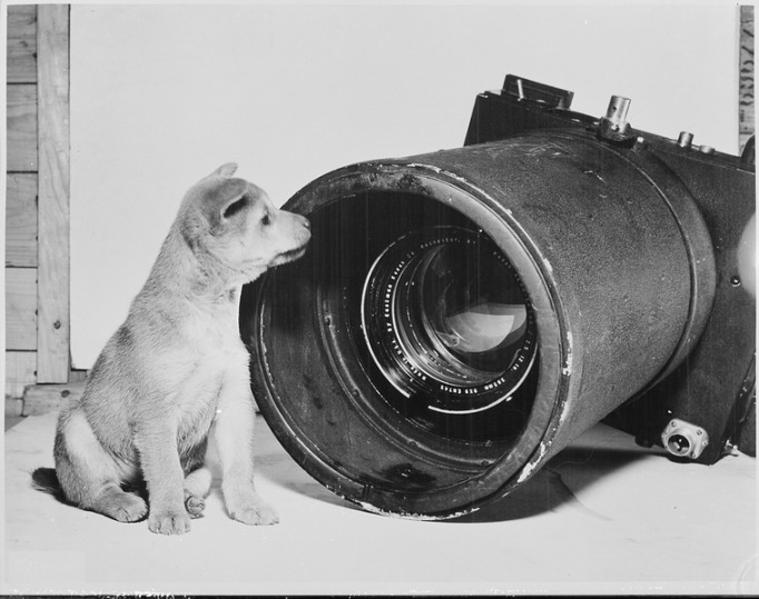 A Korean Puppy and a Fifth Air Force Aerial Camera, 1951. Sourced from the US Department of Defense/Wikimedia Commons